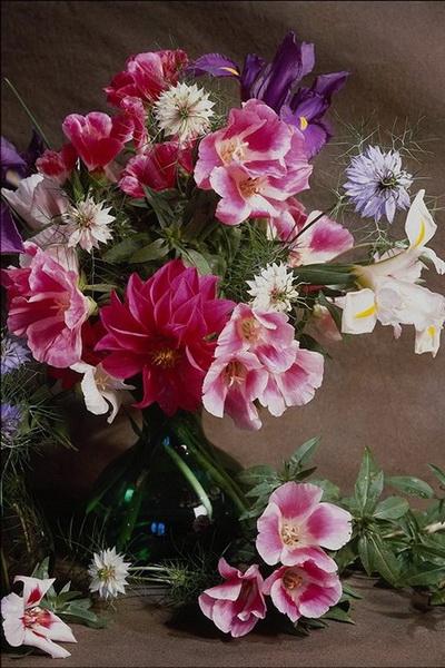 Wedding Bouquets Kamloops : Cheap striking flowers and pledge in kamloops for espousal