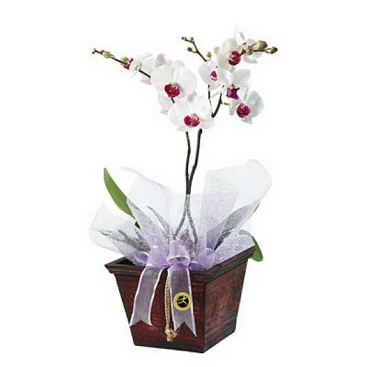 Wedding Flowers December: December Wedding Flower Ideas, Online Bridal Flowers